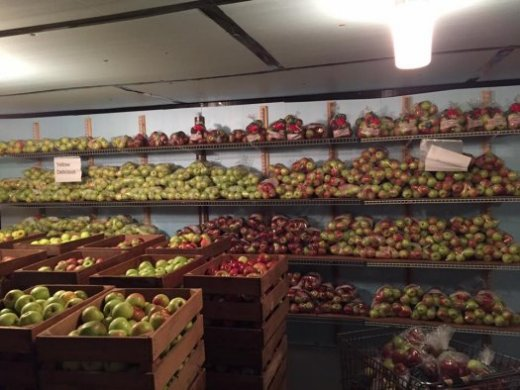 Apples stored in cooler